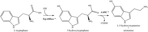 métab sérotonine