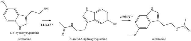 metab melatonine