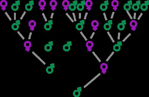 Généalogie typique de Galton-Watson