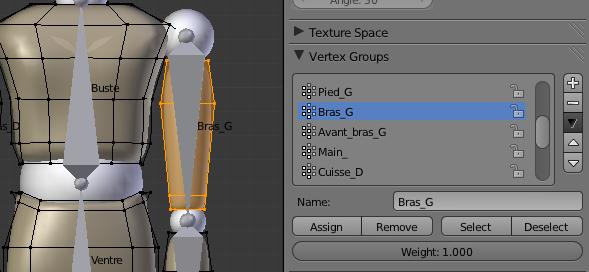 Assigner les points à l'os du bras gauche