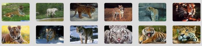 Disposition des images avec la grille