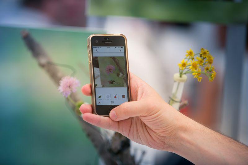 L'idée du projet Pl@ntNet est d'identifier collectivement en réseau les plantes qu'on rencontre sur le terrain et partager ses observations au sein d'un vaste réseau humain. C'est une initiative de science participative. © Inria / Photo G. Coh