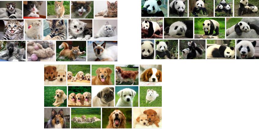 Chien, chat, ou panda ?