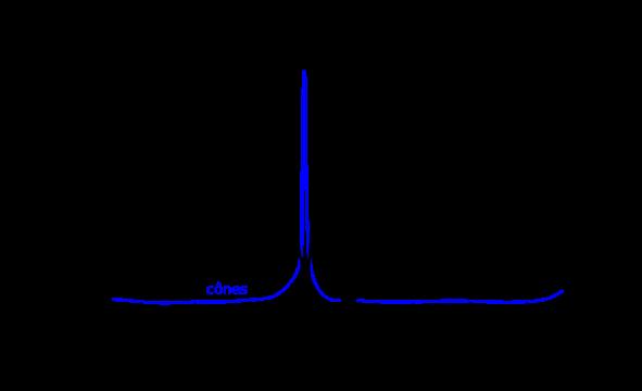 Densité de cônes et bâtonnets autour de la fovéa de l'œil humain [source : Wikipédia]
