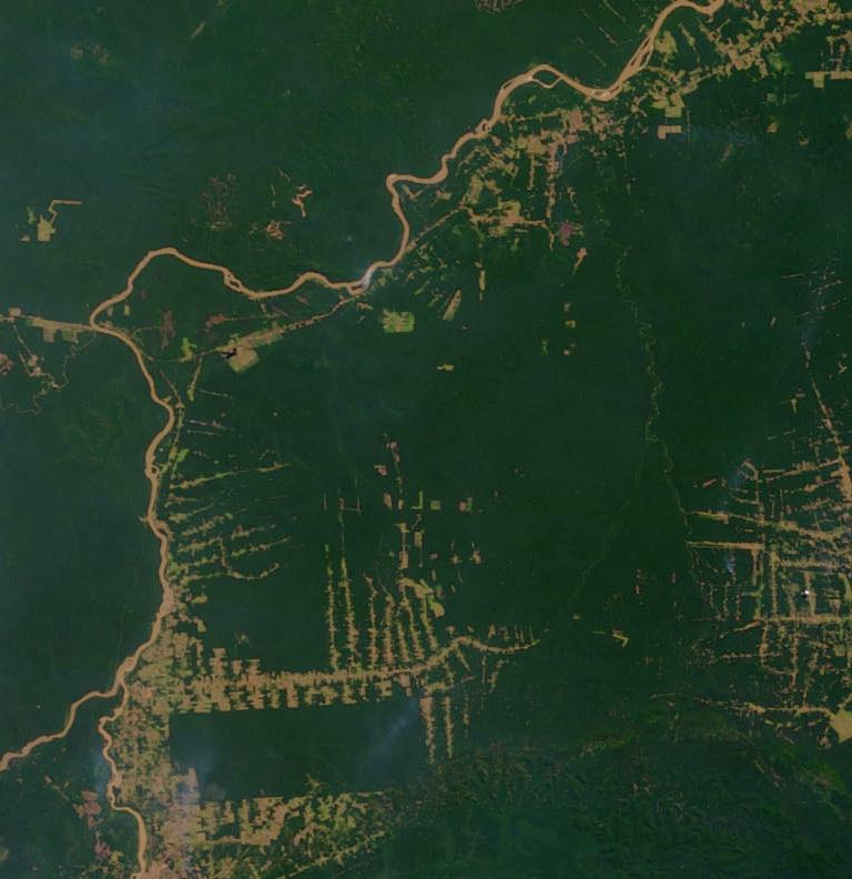 Amazonie en 2000 (source NASA's Earth Observatory)