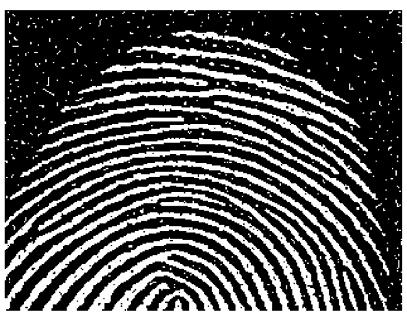 Image avant segmentation