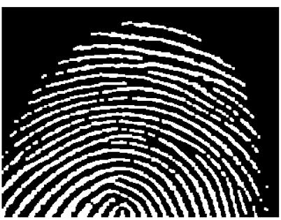 Image après segmentation et traitement morphologique