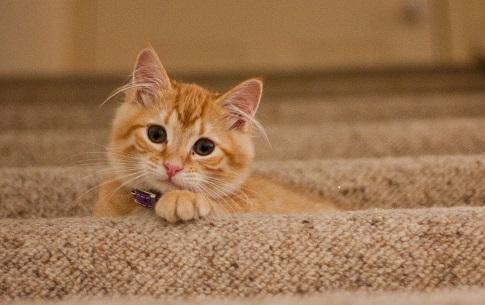 Photo d'un chat (très mignon !)