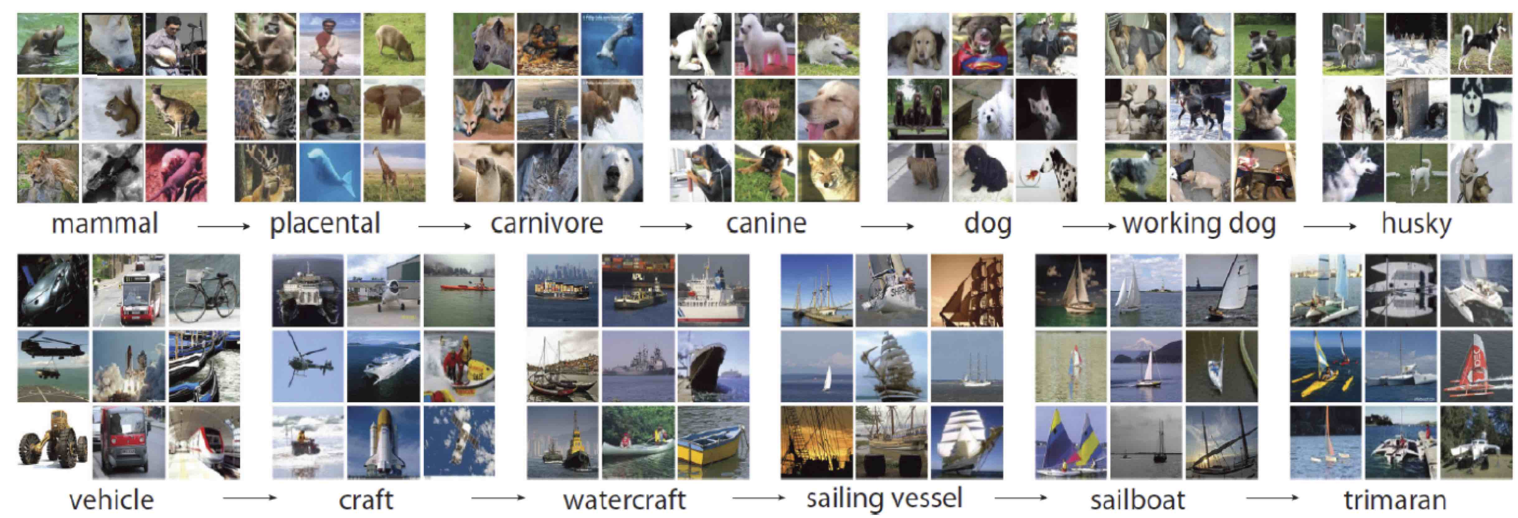 Exemples d'images de la base imageNet. Les classes d'objets sont décrit suivant une hiérarchie sémantique illustrée par ces images.
