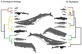Exemple de deux classifications non supervisé de poissons.