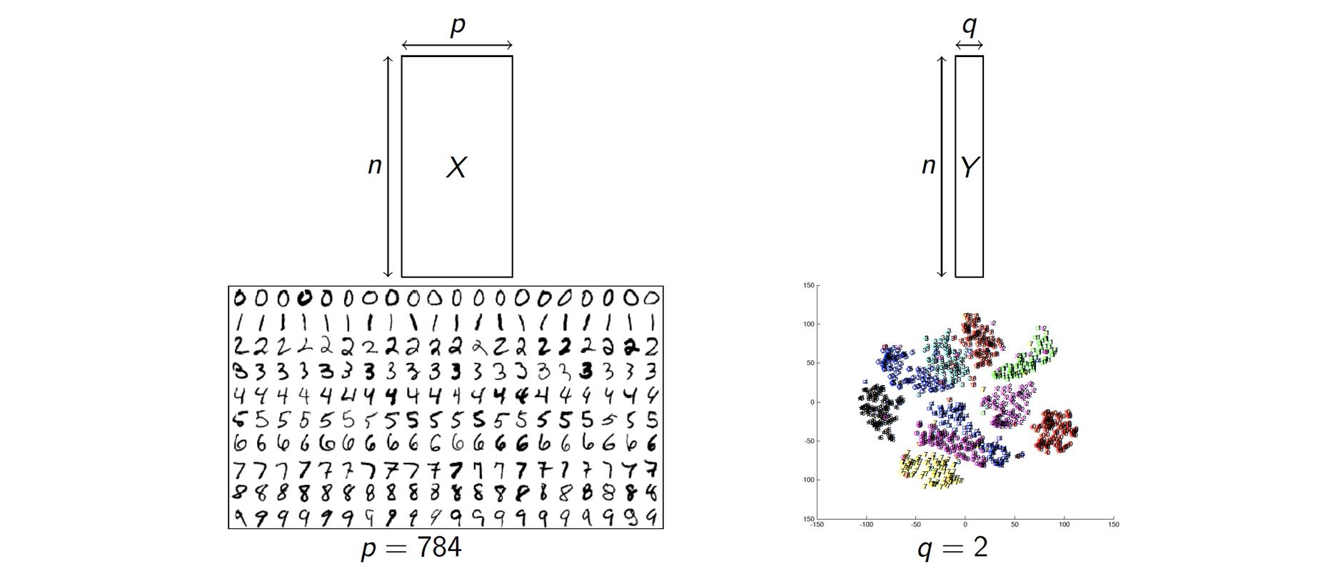 Illustration du problème de réduction de la dimesionalité. On cherche ici à représenter des image 28 x 28 (p = 784) par deux composantes (q=2).
