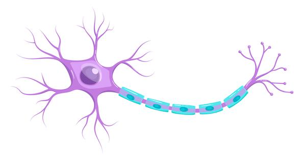Représentation d'un neurone : inspiration