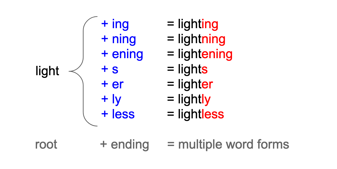 Root word with different endings generate multiple word forms. In this example, the root word is