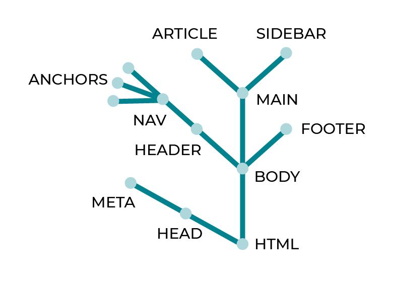 Le DOM commence avec un head et un body puis un arbre de balises se forme à l'intérieur du body pour représenter le document